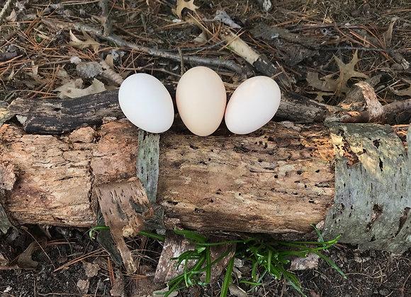 Ayam Cemani - Fertile Hatching Eggs