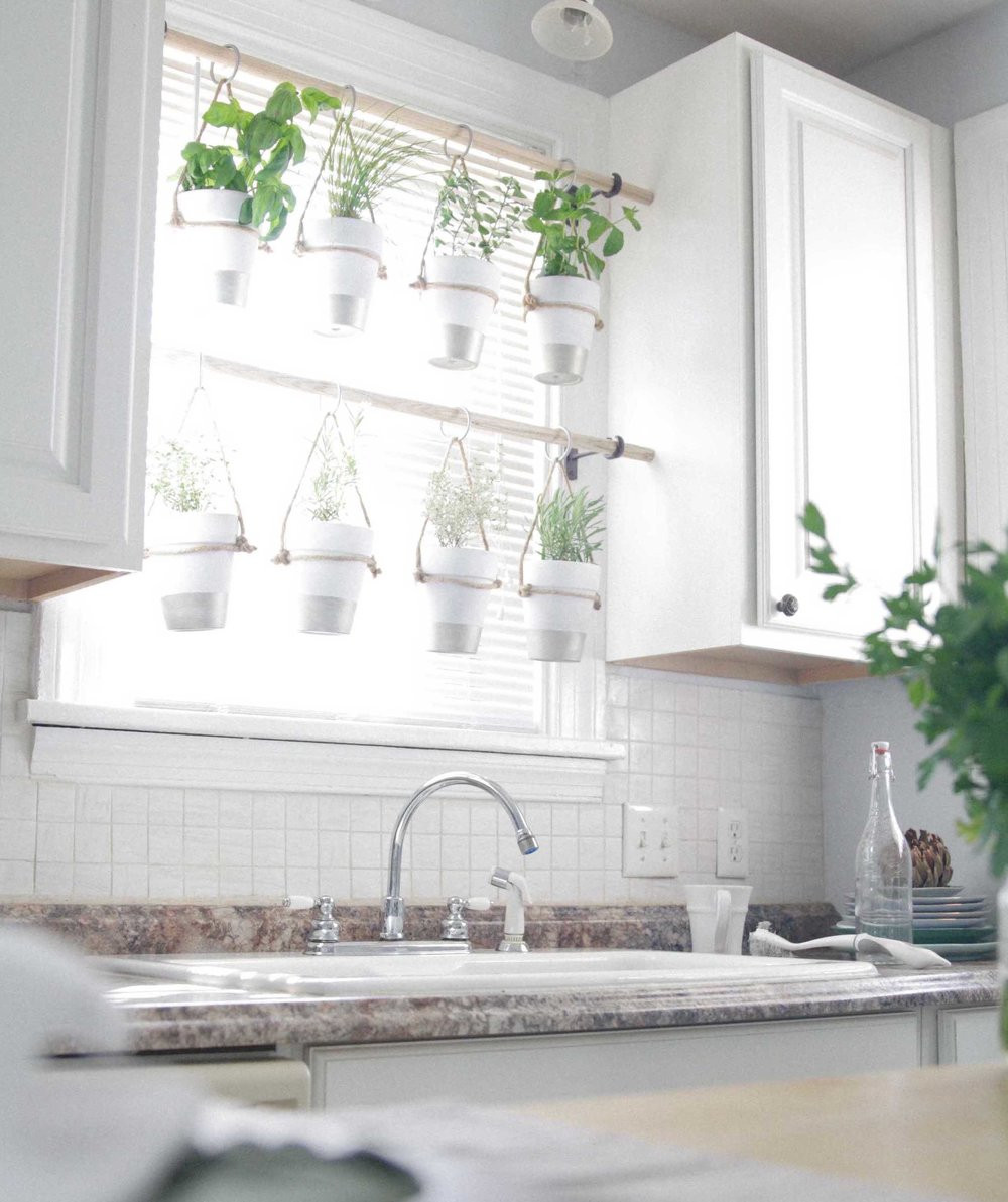 kitchen window hanging plants