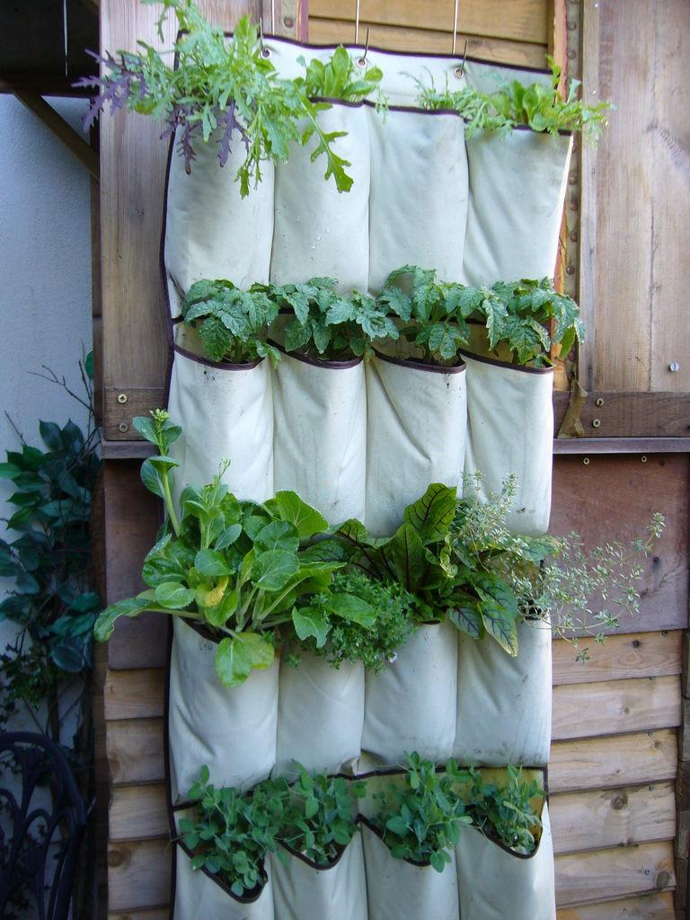 Shoe organizer garden