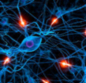 neural pathways_edited.jpg
