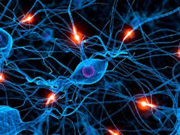 neural pathways.jpg