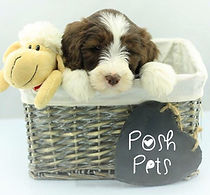 Post Pets whelping collars logo