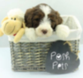 Post Pets whelping collars logo