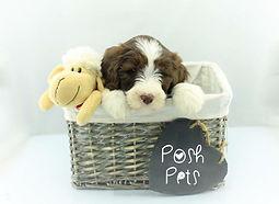 Post Pets1_edited.jpg