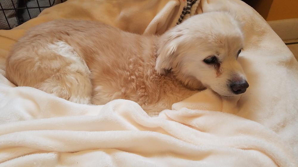 blind dog, sanctuary, senior dogs, animal rescue, rainbow bridge