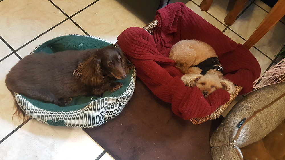senior dogs, special needs, animal sanctuary, foster, hospice