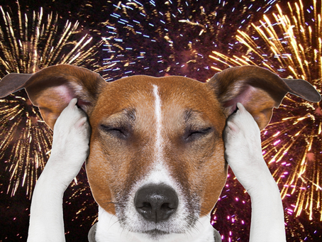 Pet Friendly Fourth of July