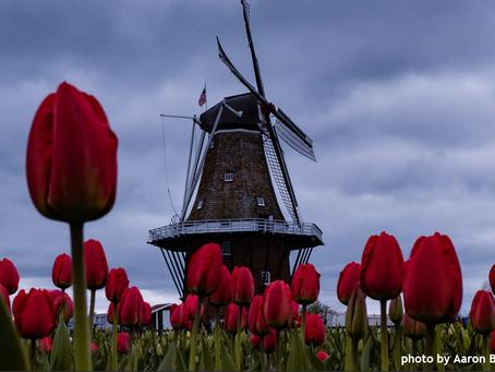 Leaving Holland