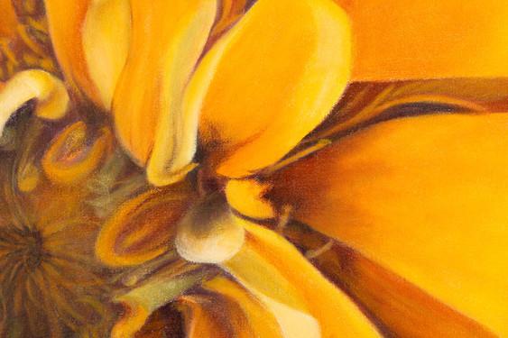 Zinnea--Detail