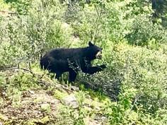 Kanada #12   Maligne Canyon, Maligne Lake und Bären