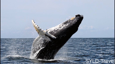 Kanada #25 | Whale Watching und Sunset in Tofino