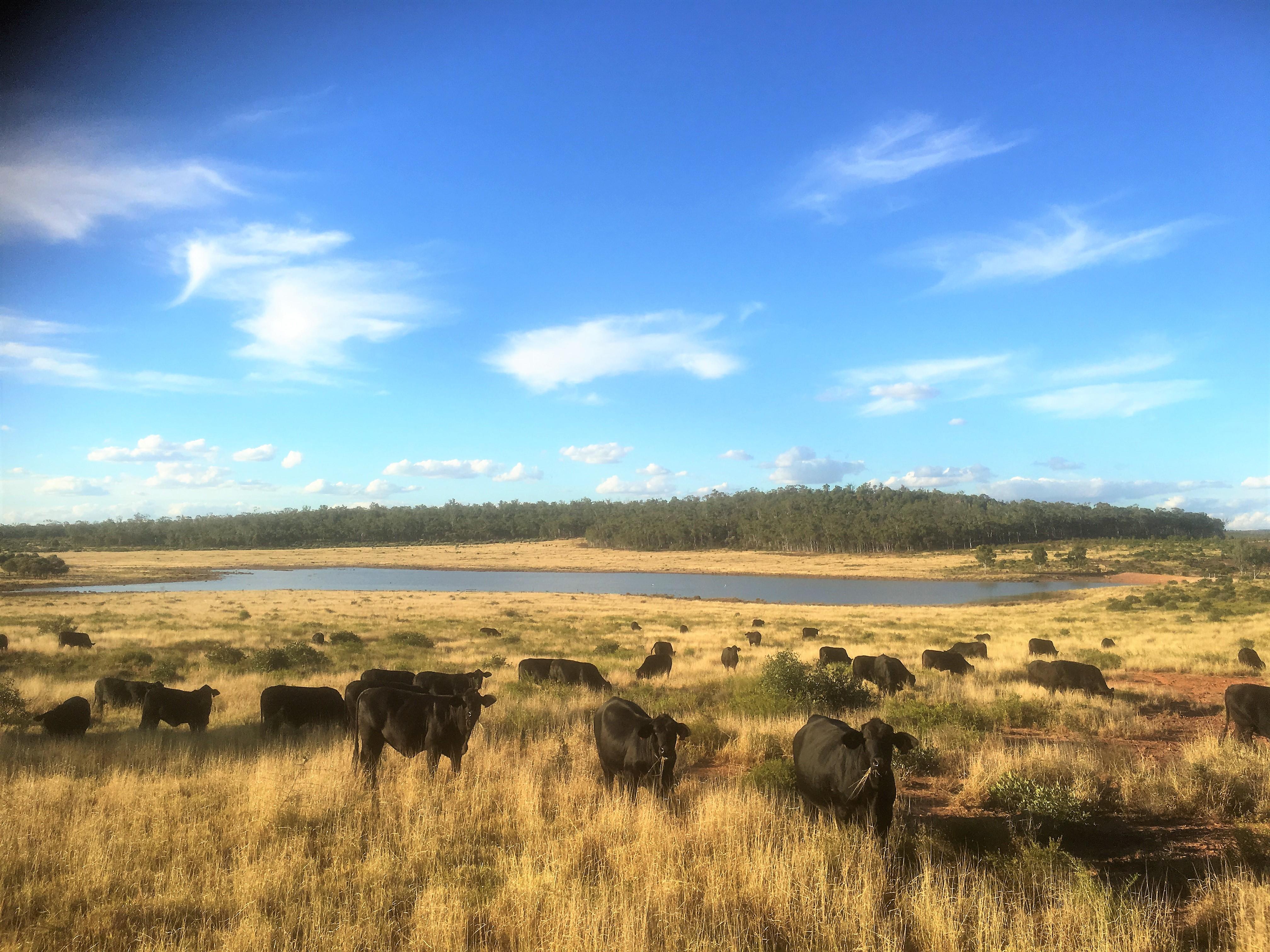 Forest Hills Brangus Breeders
