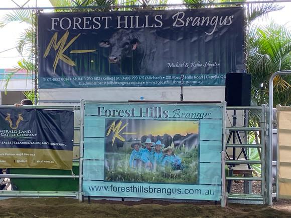 Forest Hills Brangus