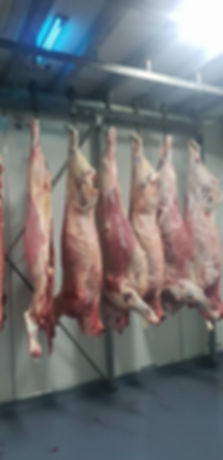 KOS Aussie Beef sides hanging in the coldroom