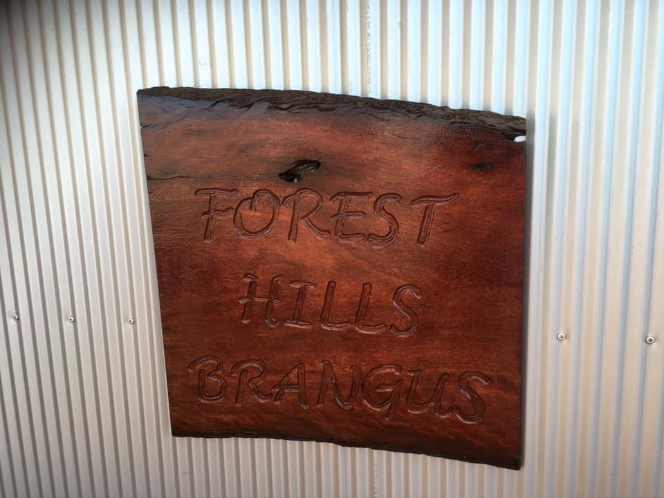 Forest Hills Brangus at Beef Week