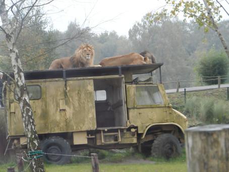Auto safari in Beekse Bergen