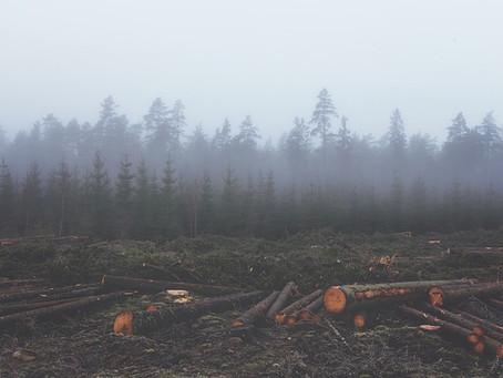 Cause della deforestazione globale