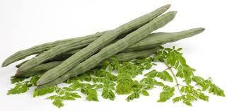 Les avantages du Moringa oleifera