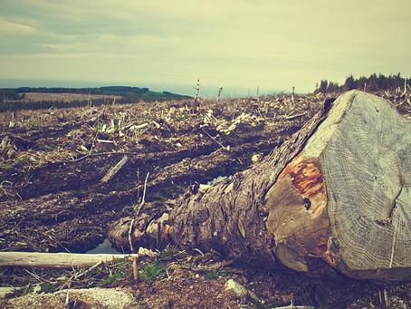 Las causas de la deforestación mundial