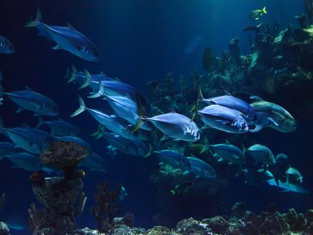 Alcuni degli animali dell'oceano profondo e le loro caratteristiche