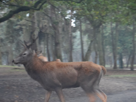 Safari en auto en Beekse bergen