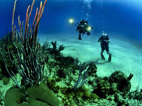 Einige der weniger bekannten Arten von Tiefsee-Tiere und ihre Eigenschaften
