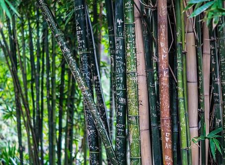 Hai mai pensato al parquet in bambù?