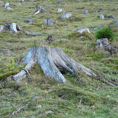 Warum werden Weltweit Wälder abgeholzt?