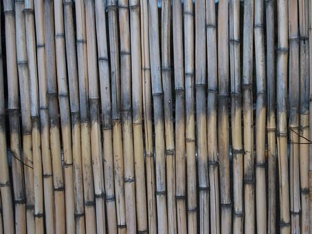 Waarom bamboe vloeren een top optie zijn!