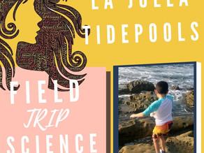 Homeschool Field Trip to La Jolla Cove Tide Pools