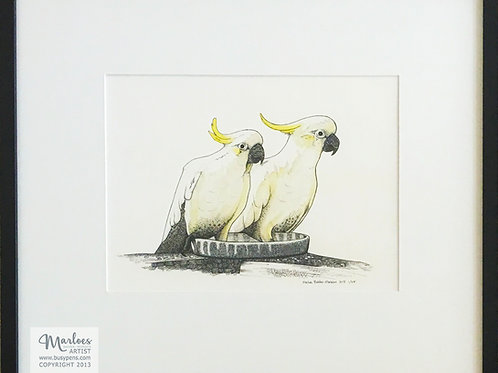 Kevin & Nigella, Sulpher crested cockatoos, Giclee Limited edition 25x