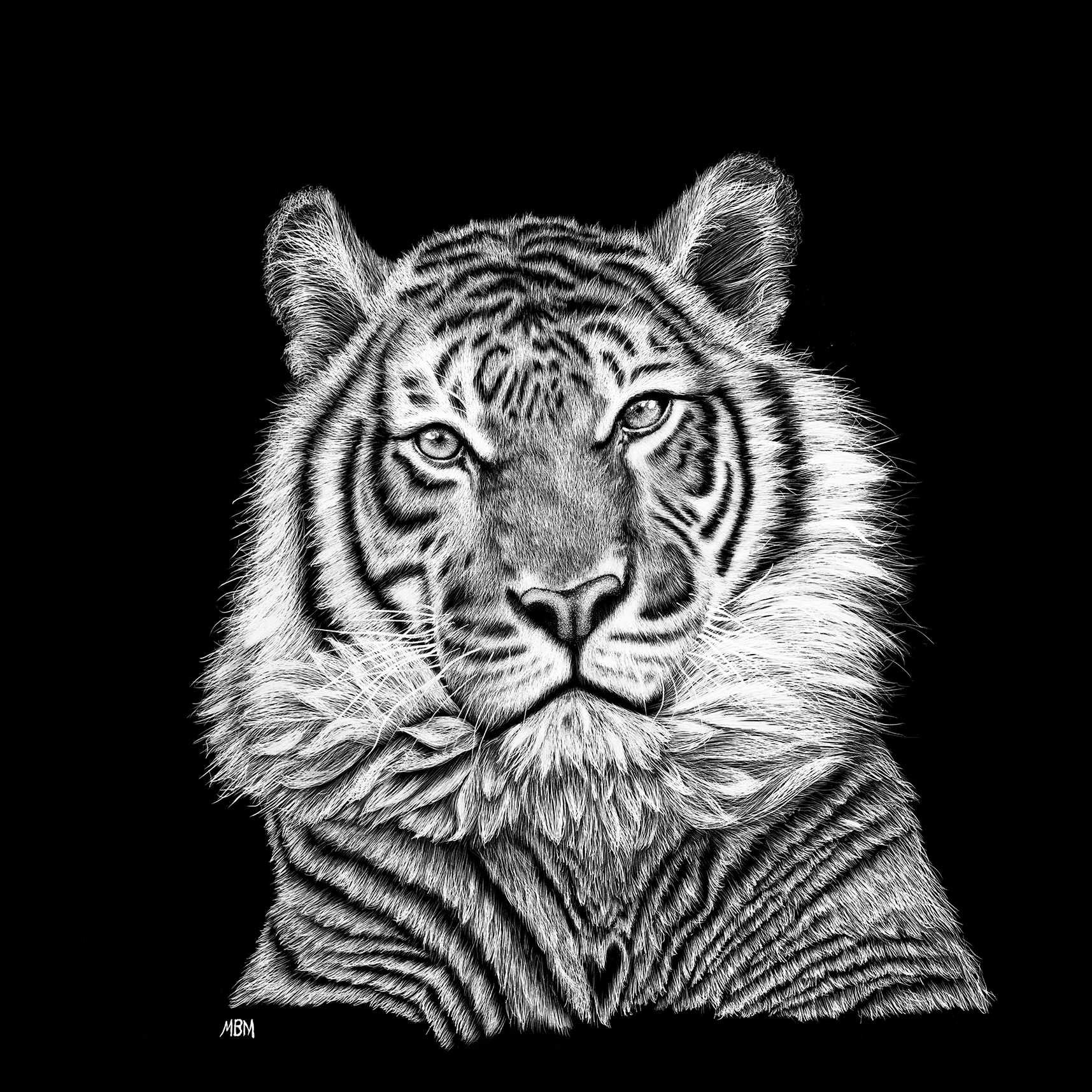 tiger july 2018 P Hedges image-web
