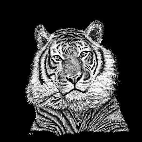 Tiger - framed