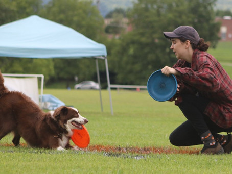 Success isn't Linear, So why would Dog Training be?
