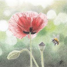 Poppy and bee.jpg