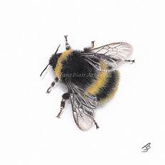 Bee3 wm.jpg
