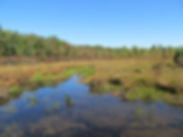 Wetland Delineation, Bog Turtle Survey, Endangered Species