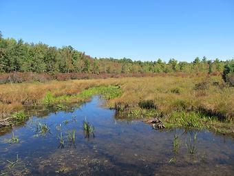 Wetland Delineation, Bog Turtle Survey, Endangered Species