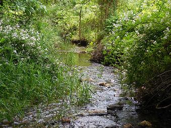 Wetland Mitigation and Permitting
