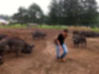 cow herding.JPG