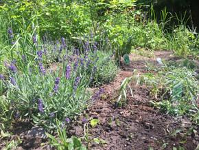 idylwild cottage herb garden