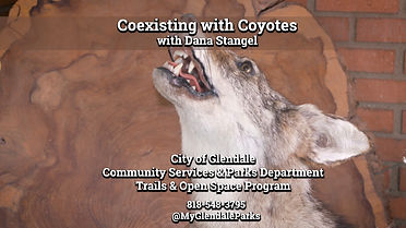 Coexisting with Coyotes - Thumbnail.jpg