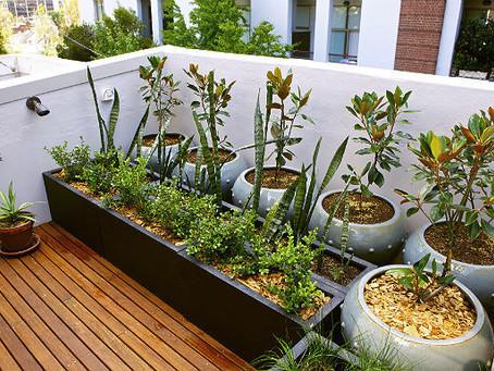 Dicas para construir um jardim em casa