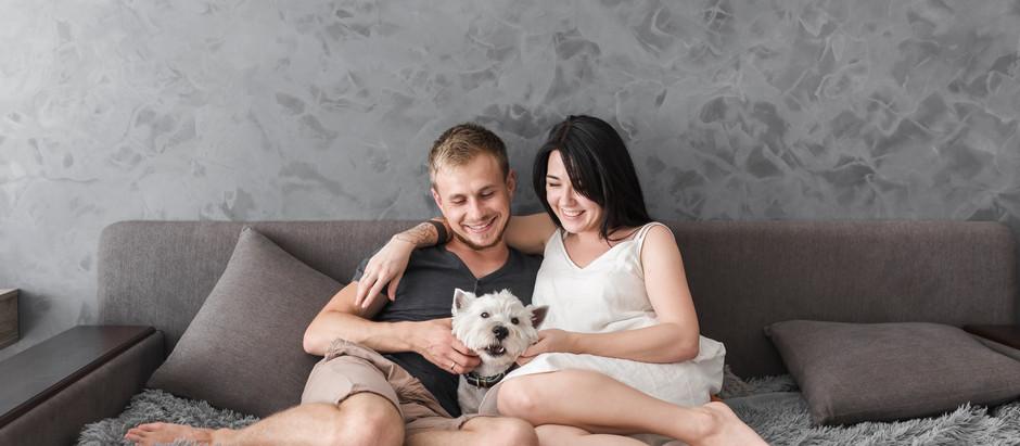 Como criar cães em apartamentos?
