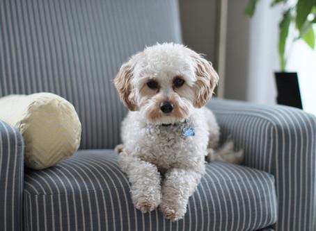 Pet sozinho em casa? Saiba o que fazer com o seu cão.