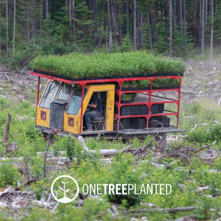 Global Reforestation