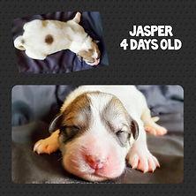 4 days old.jpg