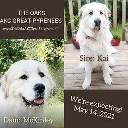McKinley x Kai 2021.jpg