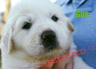 Gus Reserved1.jpg
