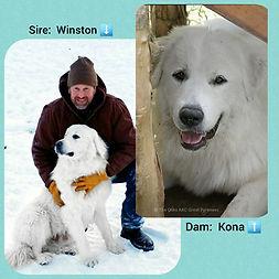 Kona x Winston.jpg